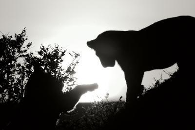 https://imgc.allpostersimages.com/img/posters/lion-cub-morning-bw_u-L-Q10PWGS0.jpg?p=0