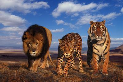 https://imgc.allpostersimages.com/img/posters/lion-jaguar-and-tiger_u-L-PZRISF0.jpg?p=0