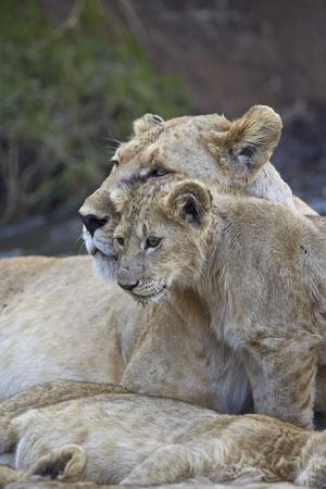 https://imgc.allpostersimages.com/img/posters/lion-panthera-leo-female-and-cub-ngorongoro-crater-tanzania-east-africa-africa_u-L-PWFJLR0.jpg?artPerspective=n