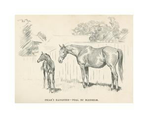 Friar's Daughter - Foal by Blenheim by Lionel Edwards