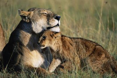 Lioness and Cub Resting on the Savanna