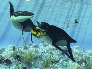 Liopleurodon Eating an Ammonite