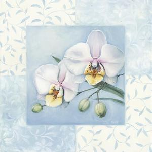 Orchid 2 by Lisa Audit