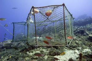 Fishing Cage in Dominica, West Indies, Caribbean, Central America by Lisa Collins