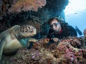 Hawksbill Turtle (Eretmochelys Imbricata) and Diver, Sulawesi, Indonesia, Southeast Asia, Asia by Lisa Collins