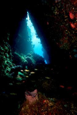 Swim Through, Dominica, West Indies, Caribbean, Central America by Lisa Collins