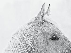 Snow Daze I Crop by Lisa Cueman