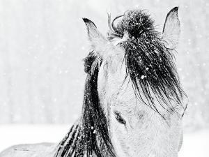 Snow Daze III Crop by Lisa Cueman