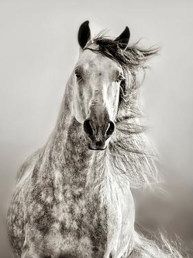 Caballo de Andaluz by Lisa Dearing