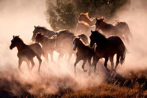 Horses by Lisa Dearing