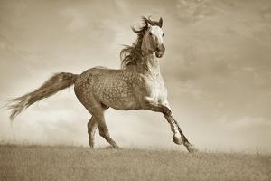 Like the Wind by Lisa Dearing