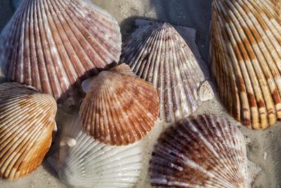 Seashells, Honeymoon Island State Park, Dunedin, Florida, USA