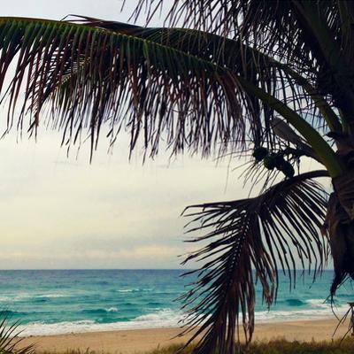 Palm and Beach by Lisa Hill Saghini