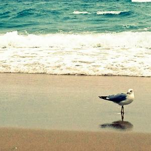 Seagull on Beach by Lisa Hill Saghini