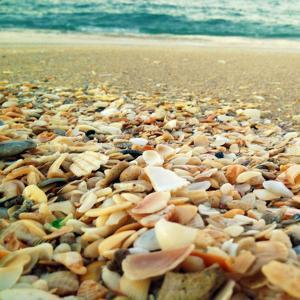 Shells Beach II by Lisa Hill Saghini