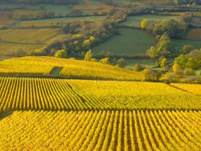 Autumn Morning in Pouilly-Fuisse Vineyards, France