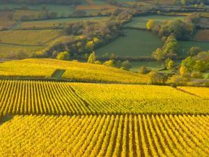 Autumn Morning in Pouilly-Fuisse Vineyards, France by Lisa S. Engelbrecht