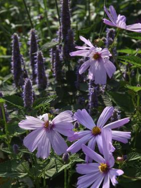 Flower Garden, Stockbridge, Berkshires, Massachusetts, USA by Lisa S. Engelbrecht