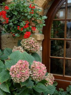 Geraniums and Hydrangea by Doorway, Chateau de Cercy, Burgundy, France by Lisa S. Engelbrecht
