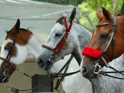 Horses Paraded Before the Race, Saratoga Springs, New York, USA
