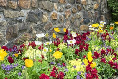 Iceland Poppy, Kennett Square, Pennsylvania, Usa by Lisa S. Engelbrecht