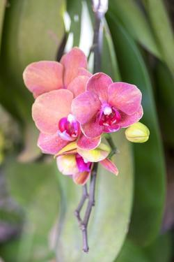 Orchid, USA by Lisa S. Engelbrecht