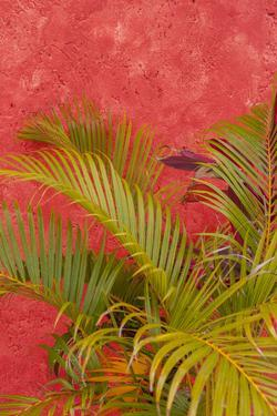 Palm Tree Against Colorful Stucco Wall, Cozumel, Mexico by Lisa S. Engelbrecht
