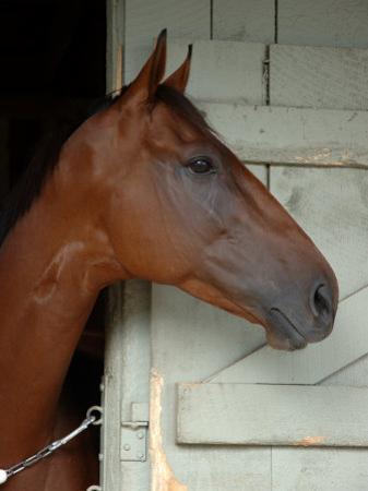 Race Horse in Barn, Saratoga Springs, New York, USA