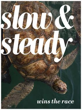 Slow and Steady by Lisa S^ Engelbrecht