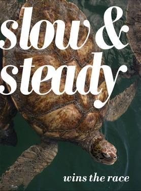 Slow and Steady by Lisa S. Engelbrecht