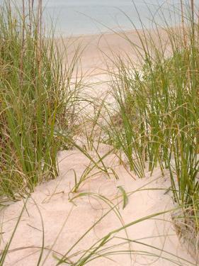 Smyrna Dunes Park, New Smyrna Beach, Florida by Lisa S. Engelbrecht