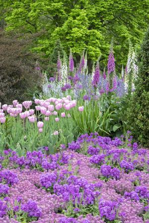 Spring Flowers, Kennett Square, Pennsylvania, Usa by Lisa S. Engelbrecht