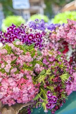 Sweet William flowers for sale, outdoor market, Honfleur, Normandy, France by Lisa S^ Engelbrecht
