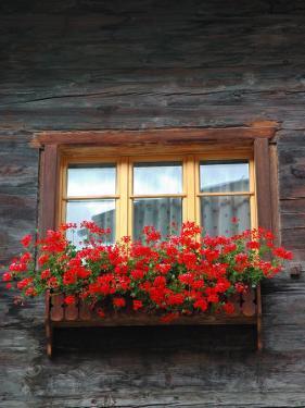 Window Box with Flowers, Zermatt, Switzerland by Lisa S. Engelbrecht