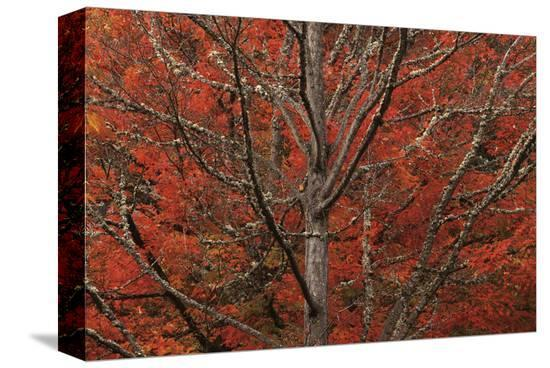 Lithia Park in Fall-David Winston-Stretched Canvas Print