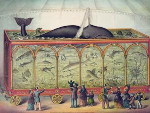 Lithograph of 19th Century Traveling Aquarium