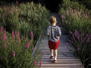 Little Boy Walking Away on Path Between Flowers