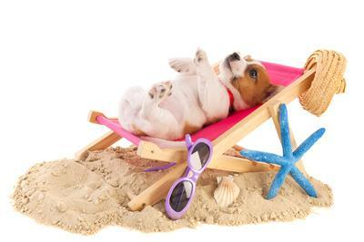 https://imgc.allpostersimages.com/img/posters/little-cute-beach-puppy-resting-in-chair_u-L-Q1038380.jpg?artPerspective=n