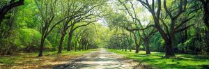 Live Oaks and Spanish Moss Wormsloe State Historic Site Savannah Ga