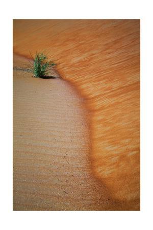 https://imgc.allpostersimages.com/img/posters/liwa-sands-s-curve_u-L-Q1CATHD0.jpg?artPerspective=n