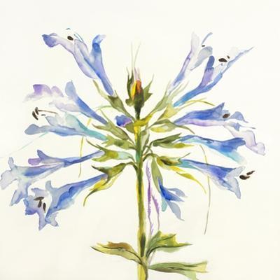 Sheer Beauty III by Liz Jardine