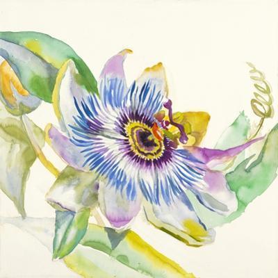 Sheer Beauty IX by Liz Jardine