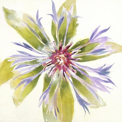 Sheer Beauty VIII by Liz Jardine