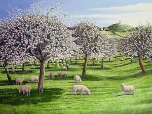 Celebration of Apple Blossom in Somerset, 2004 by Liz Wright