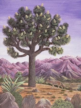 Joshua Tree and Coyote, 1983
