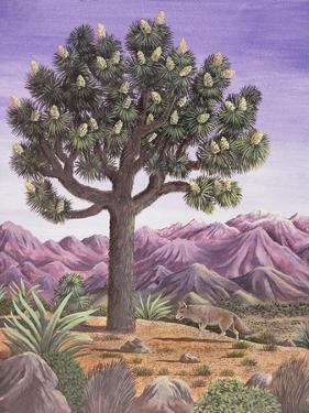 Joshua Tree and Coyote, 1983 by Liz Wright