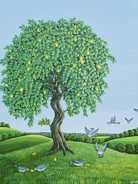 Quince Tree and Pigeons, 1983 by Liz Wright