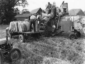 Loading Threshed Barley