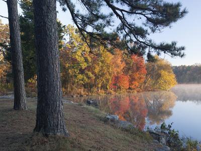 https://imgc.allpostersimages.com/img/posters/loblolly-pine-on-lake-bailey-petit-jean-state-park-arkansas_u-L-Q1CZY160.jpg?p=0