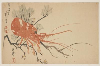 https://imgc.allpostersimages.com/img/posters/lobster-plum-and-pine-branch-c-1818_u-L-PUSYEK0.jpg?artPerspective=n